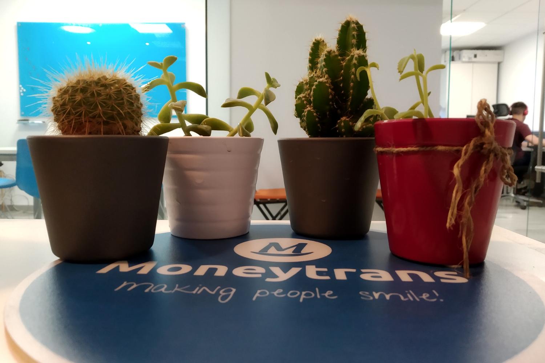 Comment protégeons-nous l'environnement chez Moneytrans ?